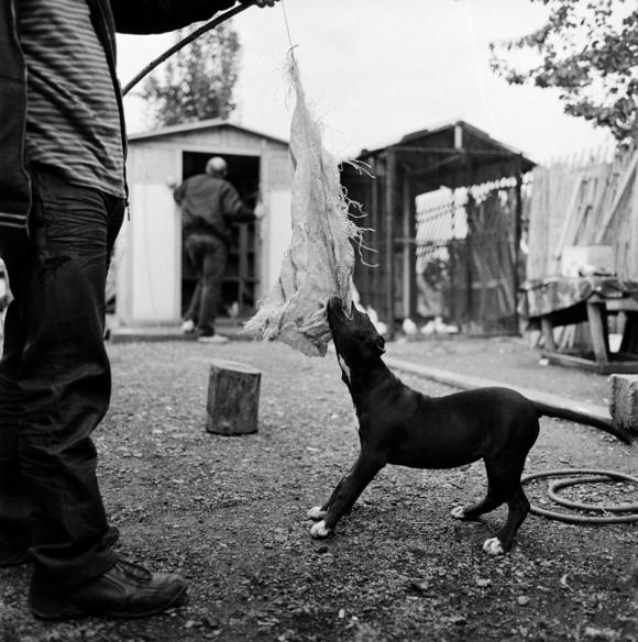 We are dogs! © Jaka Babnik