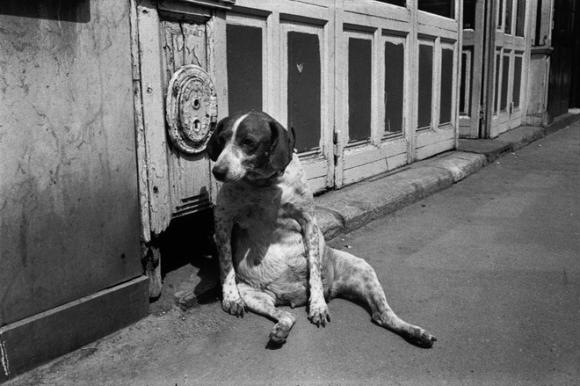 Richard Kalvar, France, Paris, Rue de l'Ouest, Tired Dog, 1974
