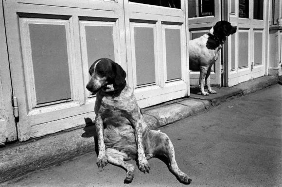 Richard Kalvar, France, Paris, Rue de l'Ouest, Tired Dog and Friend, 1975