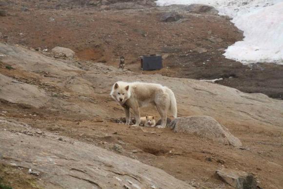 Tassilaq und Kummiut in Ostgrönland, Foto: Marion Löcker