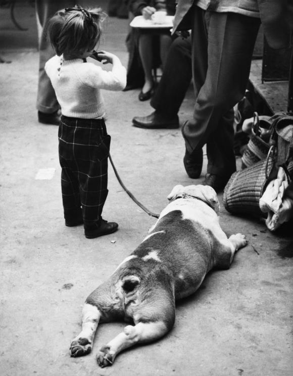 Shirley Baker, Dog Show 1961-1978