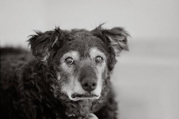 Nancy LeVine, Curley, 14 Jahre alt, Kanab, Utah