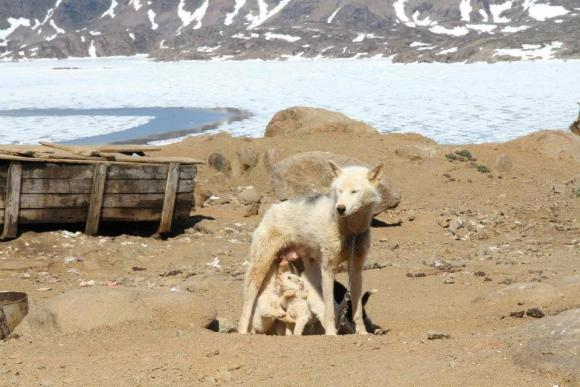 Mama mit Kindern, Tassilaq und Kummiut in Ostgrönland, Foto: Marion Löcker