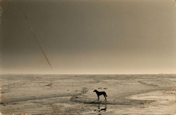 #4(dog on river), 1993 © Masao Yamamoto