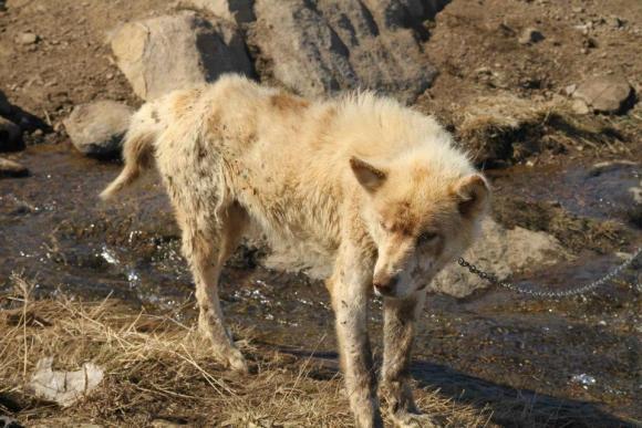 Er sieht sehr schlecht aus, Tassilaq und Kummiut in Ostgrönland, Foto: Marion L