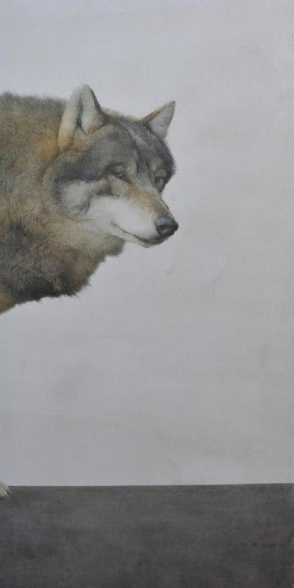 Marzio Tamer, Wolf