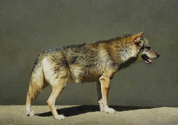 Marzio Tamer, Wolf 2008
