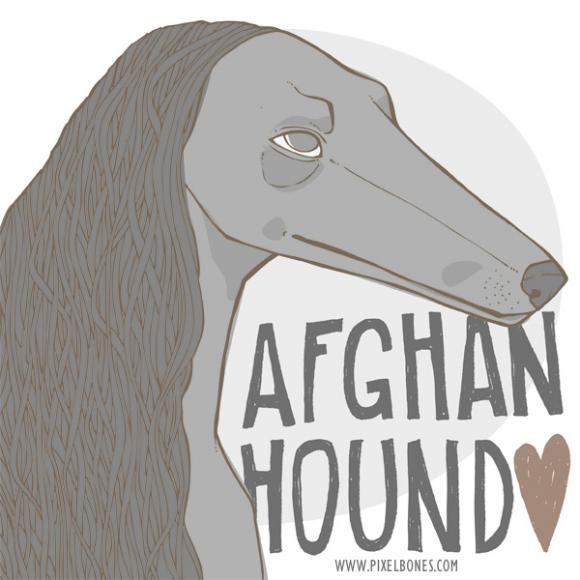 Afghanhound © Julia Henkel