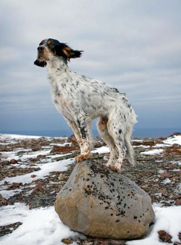 Arnold Corey, Crazy the dog and finnmark boulder, 2008