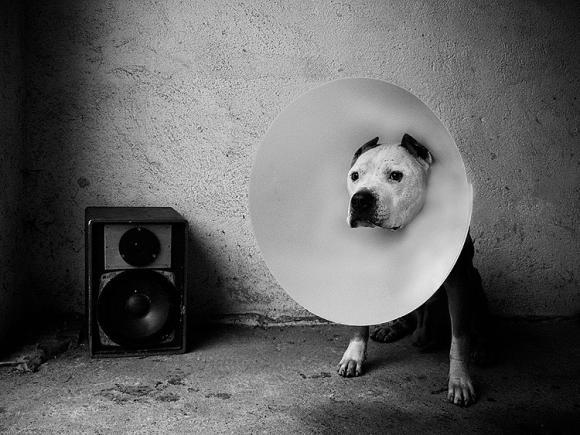 Beastie Boy © Tamás Hajdu