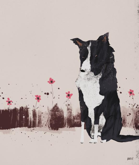Boost, Bordercollie © Anja Zaharanski