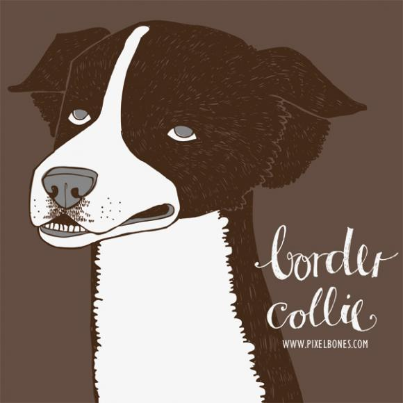 Border Collie © Julia Henkel