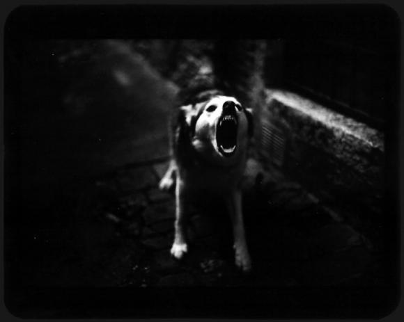 ©Giacomo Brunelli