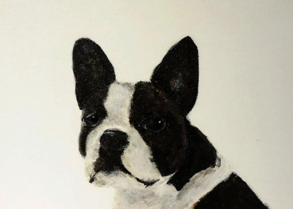 Bulldogge Beatrix © Wilma Wau