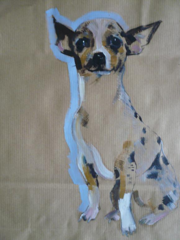 Chihuahua © Sally Muir