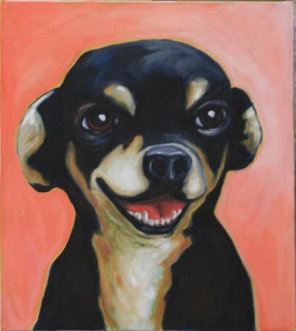 Chihuahua lachend © Tobias Emskötter