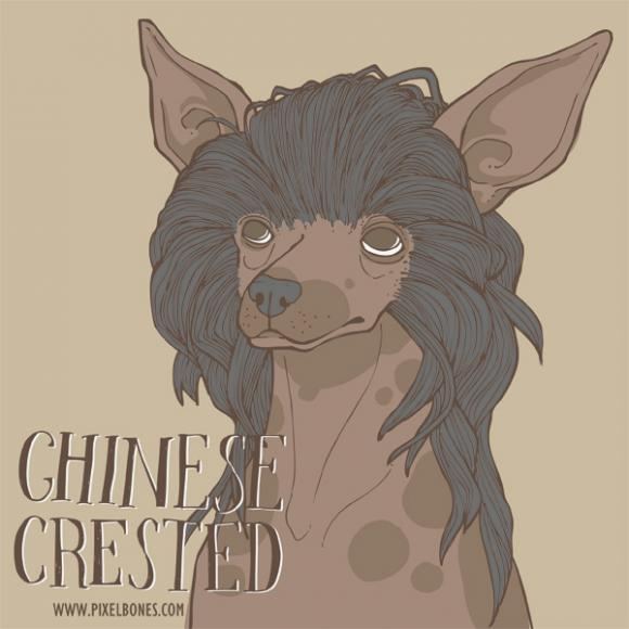 Chinese Crested © Julia Henkel