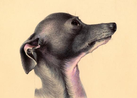 colored ballpoint pen © Nicolas V. Sanchez
