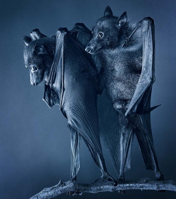 Compassion Bats © Tim Flach