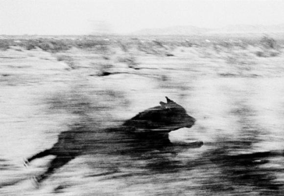 Dogs Chasing My Car in the Desert © John Divola