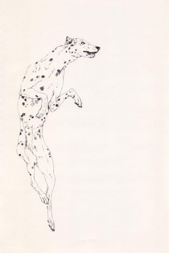 Dalmation © Lauren Nassef