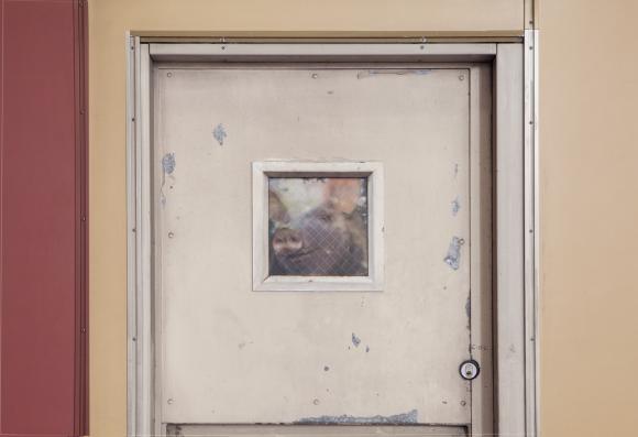 Dan Witz, Empty the Cages 4, Foto: PETA