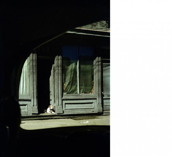 Saul Leiter, Dog in Doorway, 1962