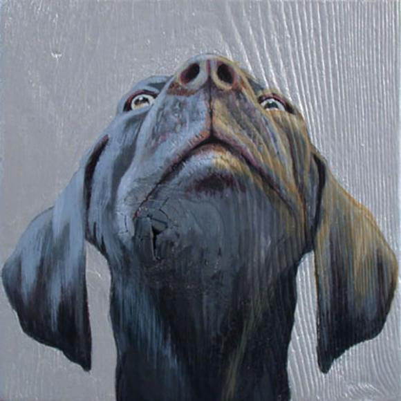 Dog Looking Up, 2004 © Jane O'Hara