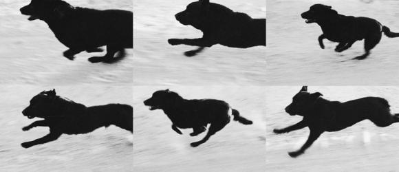 Run Sequence © John Divola