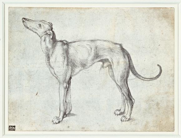 Albrecht Dürer,  A greyhound, um 1500, Royal Collection Trust