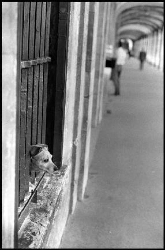 Elliott Erwitt, France, Paris, 1966