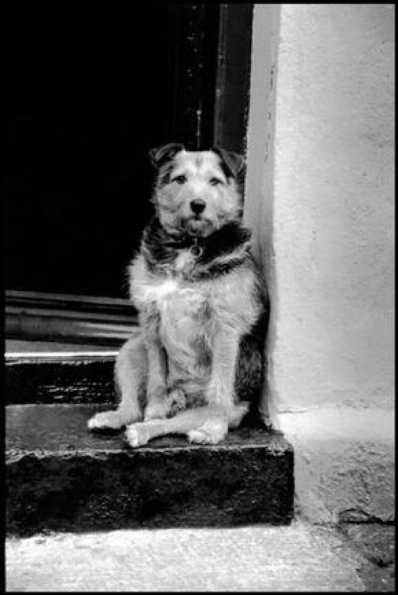 Elliott Erwitt, Ireland, Cloyne, 1991
