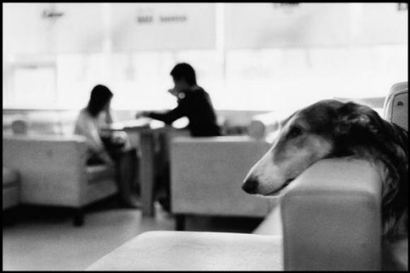 Elliott Erwitt, Korea, Seoul, Dog Cafe, 2007