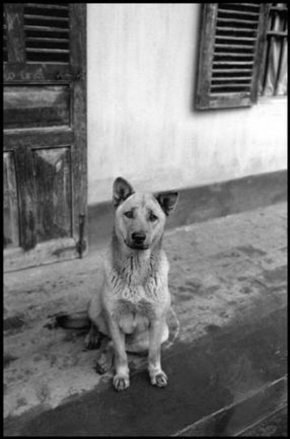 Elliott Erwitt, North Vietnam, 1994