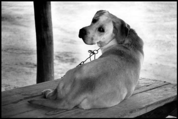 Elliott Erwitt, South of France, 1991
