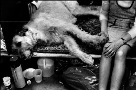 Elliott Erwitt, USA,  New York City, 1973