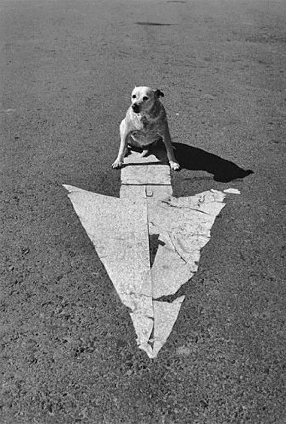 Elliott Erwitt, USA, Arizona, Page, 1998