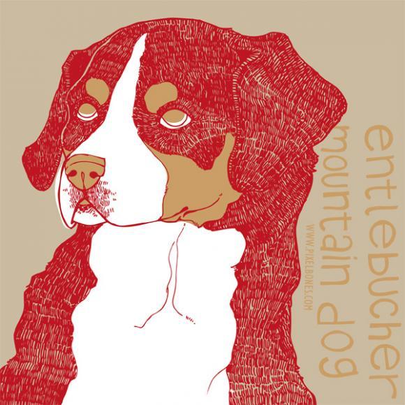 Entlebucher Mountain Dog © Julia Henkel