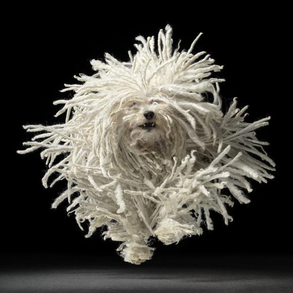 Flying Mop © Tim Flach