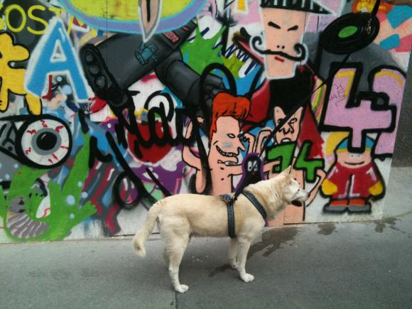 Hund vor dem Baustellenzaun