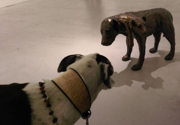 Ein interessierter Ausstellungsbesucher, Foto: ars canis