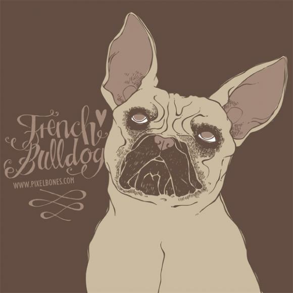 French Bulldog © Julia Henkel