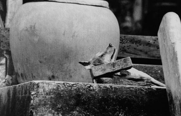 Surat Osathanugrah, Glücklicher schlafender Hund, 2003