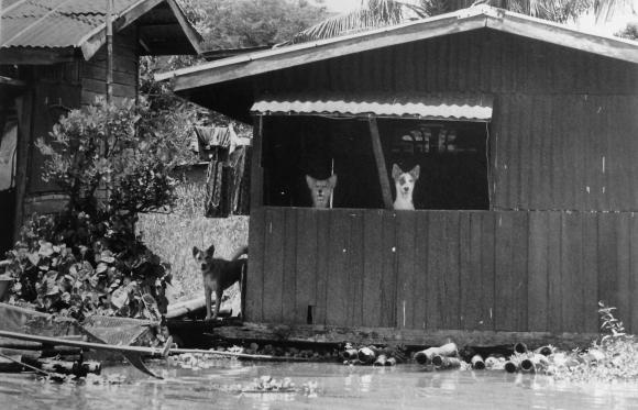 Surat Osathanugrah, Hundehütte, 2002