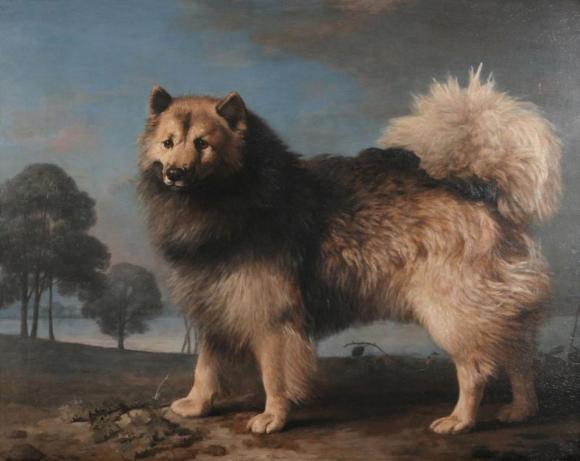 George Stubbs, Turk, ein Hund des Duke von Rutland, 1778