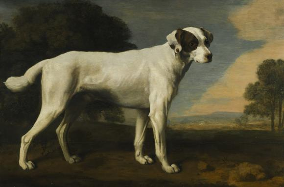 George Stubbs, Viscount Gormanston's White Dog, 1781