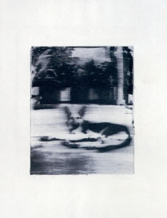 Gerhard Richter, Hund, 1965, Siebdruck