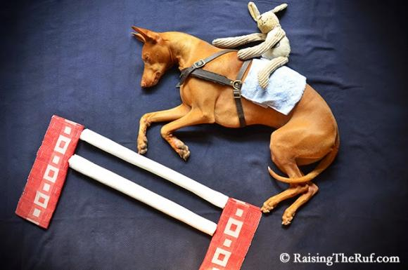 Hold your horses... © RaisingTheRuf.com