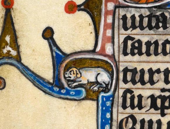 Hund im Ornament versteckt