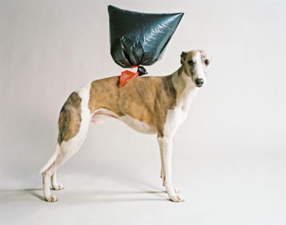 Nadin Maria Rüfenacht, Hund mit Ballon, 2009